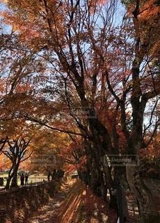 秋のお散歩の写真・画像素材[4866218]