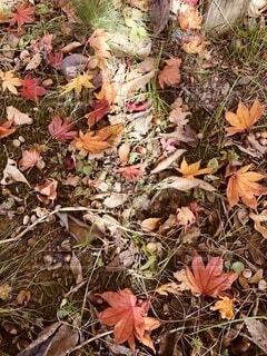 秋の落し物の写真・画像素材[4866227]