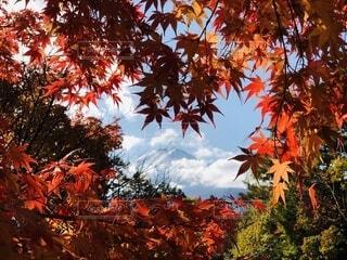もみじのハートの中の富士山の写真・画像素材[4866222]