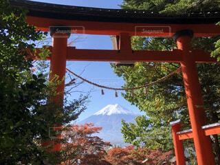 新倉山浅間公園の鳥居からみた富士山と紅葉の写真・画像素材[4866197]