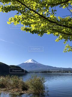 緑の銀杏と富士山の写真・画像素材[4866201]