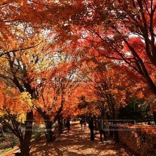 秋の散歩 2の写真・画像素材[4866249]