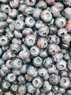 ブルーベリー収穫の写真・画像素材[4881706]