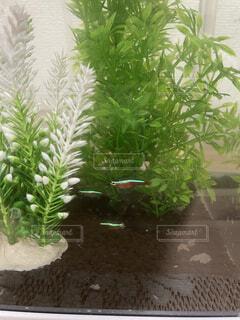 植物のクローズアップの写真・画像素材[4862776]