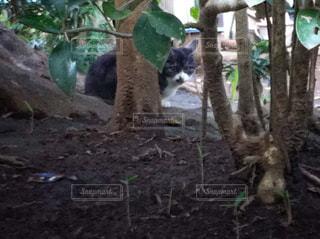猫の写真・画像素材[221598]