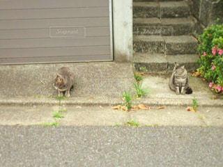猫の写真・画像素材[221600]