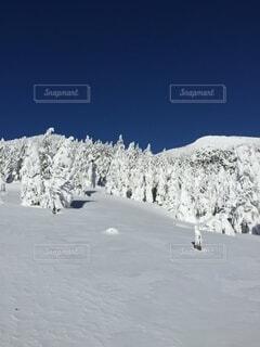 冬の写真・画像素材[4863690]