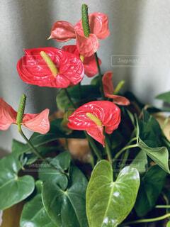 植物の上にピンクの写真・画像素材[4874671]