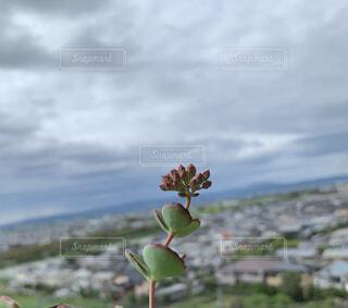 野原のサボテンの写真・画像素材[4864496]
