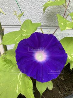 植物の上の紫色の花の写真・画像素材[4870318]
