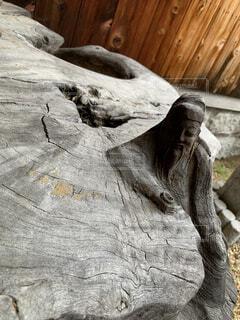 木のクローズアップの写真・画像素材[4870325]