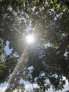 木のクローズアップの写真・画像素材[4874290]