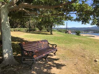 木の隣にある空の公園のベンチの写真・画像素材[4874292]
