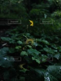 花のクローズアップの写真・画像素材[4869554]