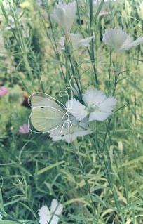 花のクローズアップの写真・画像素材[4869552]