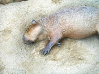 動物の写真・画像素材[221502]