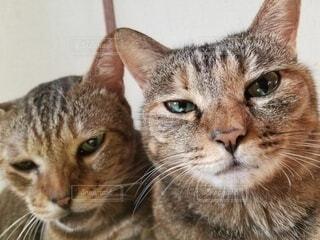 カメラ目線の猫の写真・画像素材[4864940]