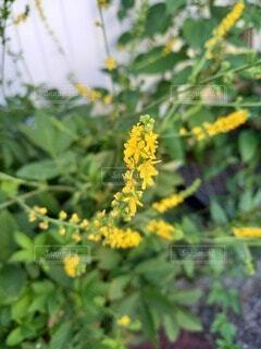 可憐な花の写真・画像素材[4866692]