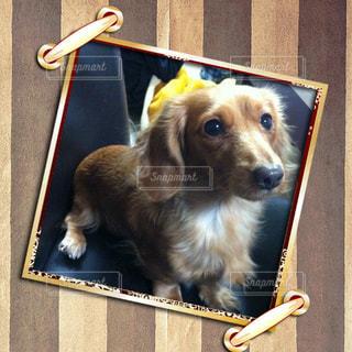 犬の写真・画像素材[219960]