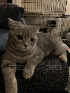 ソファで寛ぐ猫の写真・画像素材[4865157]