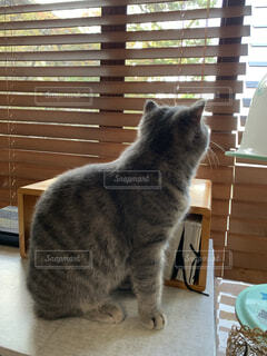 外を眺める猫の写真・画像素材[4865166]