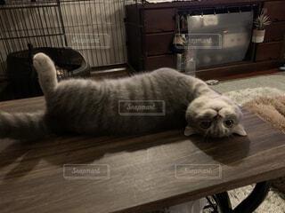 逆さま猫の写真・画像素材[4871282]