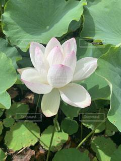植物の写真・画像素材[4875609]