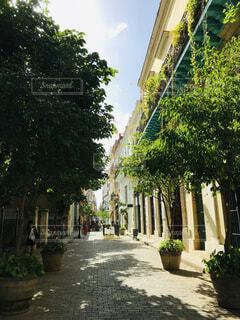 海外のカラフルな家と木々が並ぶ通りの写真・画像素材[4871618]