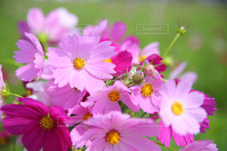 花の写真・画像素材[220094]