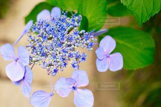 花の写真・画像素材[220119]