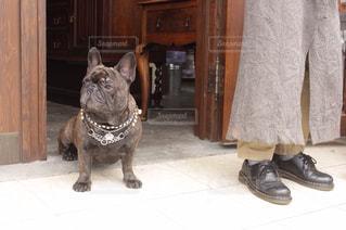 犬の写真・画像素材[220058]