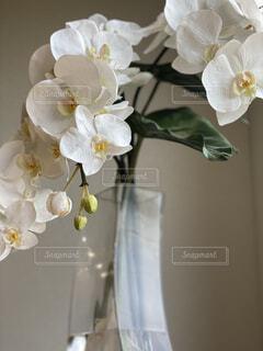 テーブルの上の花の写真・画像素材[4873806]