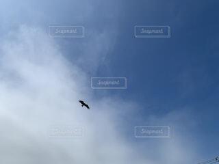 トンビに狙われての写真・画像素材[4865801]