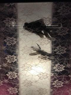 金魚アートの写真・画像素材[4873119]