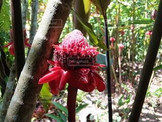 大きな花❁の写真・画像素材[4873306]