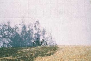 背景に木がある草地のベンチの写真・画像素材[4872080]
