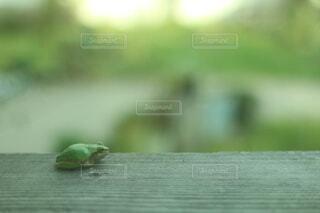 窓の外でじっとしているカエルの写真・画像素材[4872162]