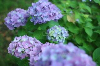 花のクローズアップの写真・画像素材[4875525]