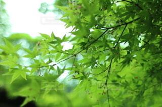森の中の緑の植物の写真・画像素材[4875529]