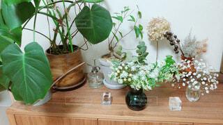 観葉植物が並んだ棚の写真・画像素材[4889200]