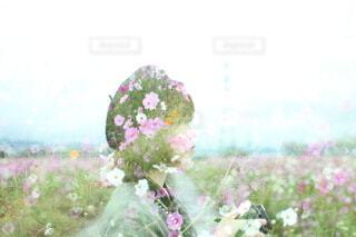 コスモス畑に立つ女性の写真・画像素材[4889209]