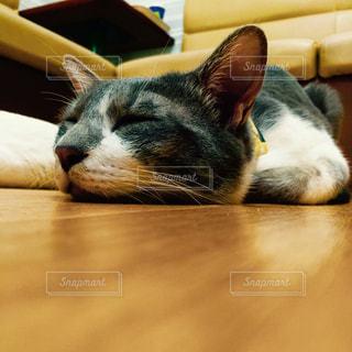 猫の写真・画像素材[220225]