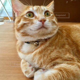 猫の写真・画像素材[220226]