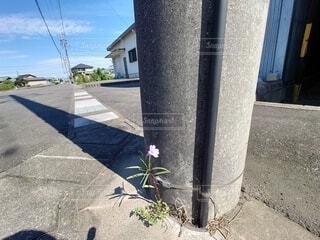 生きる勇気を与えてくれる花の写真・画像素材[4865523]