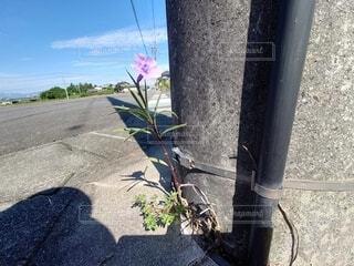 あなたを応援する花の写真・画像素材[4865522]