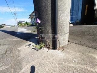 生きることを教えてくれる花の写真・画像素材[4880891]