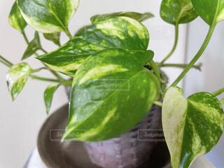 観葉植物の写真・画像素材[4865480]