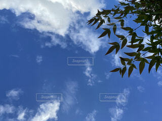 見上げた空の写真・画像素材[4865638]