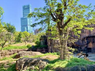 木の隣に立っているキリンのグループの写真・画像素材[4866678]