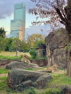 岩の上に立つ動物の群れの写真・画像素材[4866789]